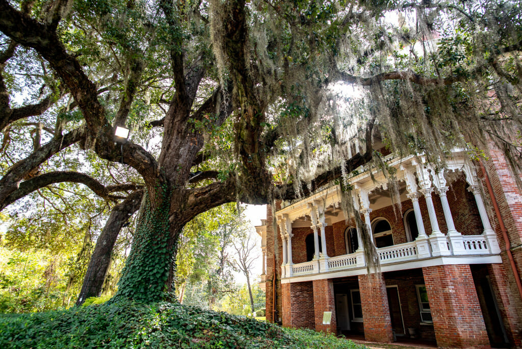 Longwood Mansion is one of the most fascinating of the antebellum homes. It is open year round for tours. It is a home that was left unfinished when the Civil War began. Photo is of a live oak tree dripping with Spanish moss in front of Longwood Mansion