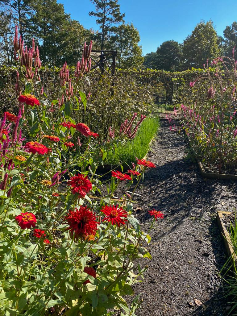 vegetable gardens at Moss Mountain Farm