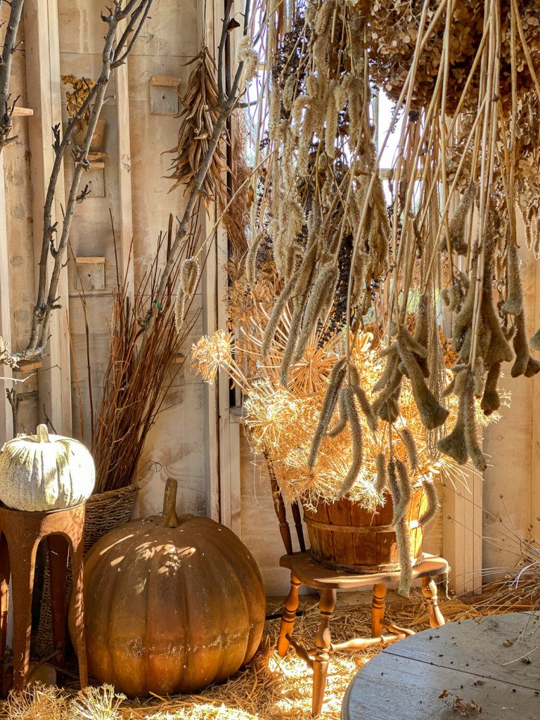 Plants Drying in a shed