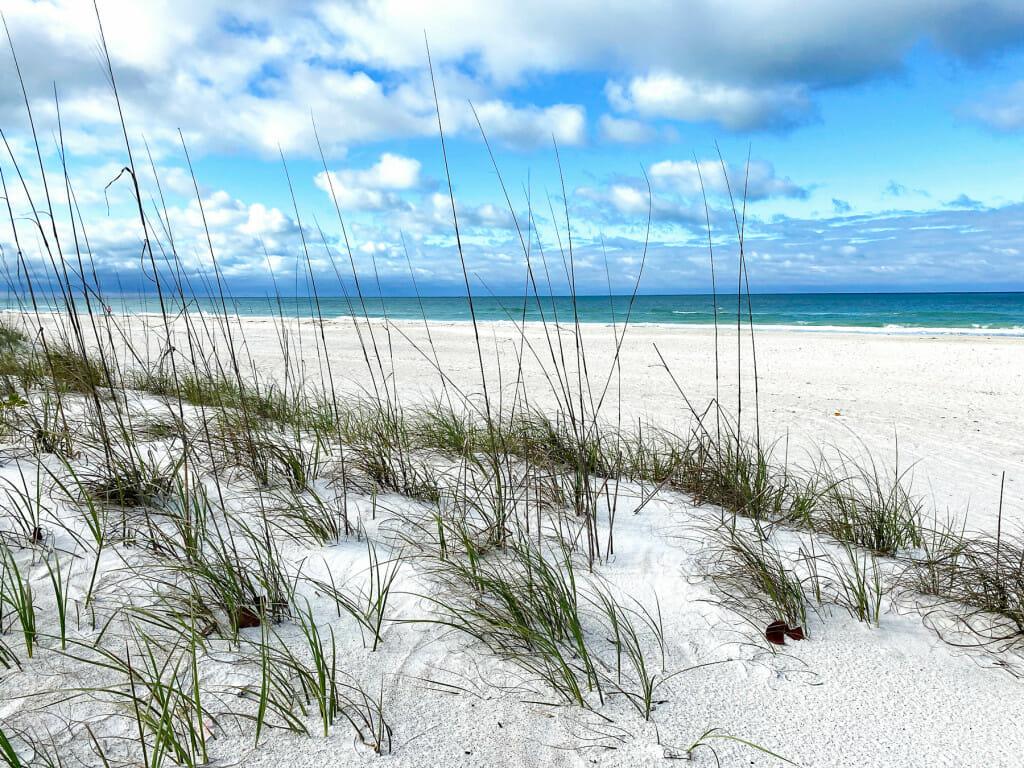 view of the beach through sea grass.