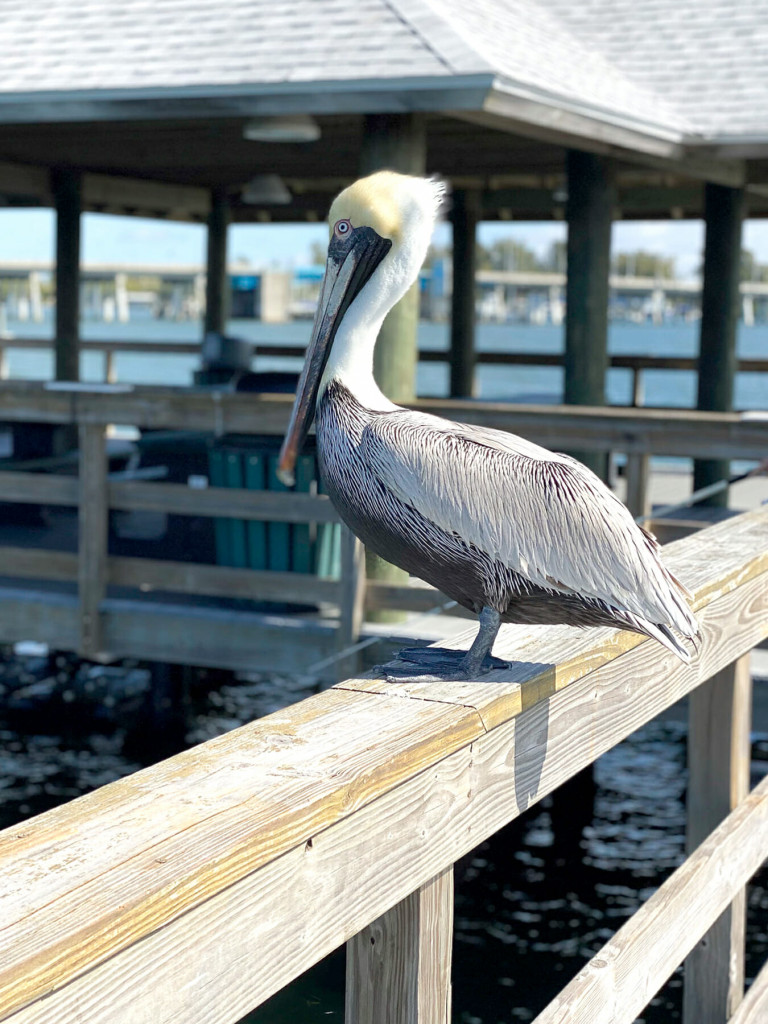 birdwatching is an important anna maria island activity