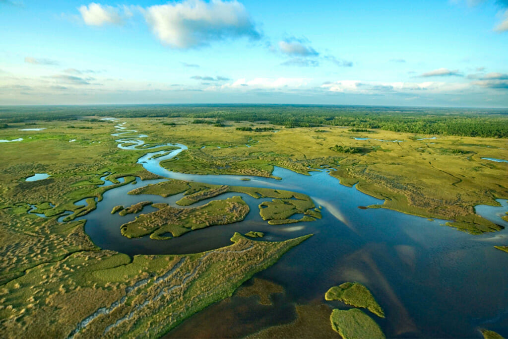 aerial view of the Everglades