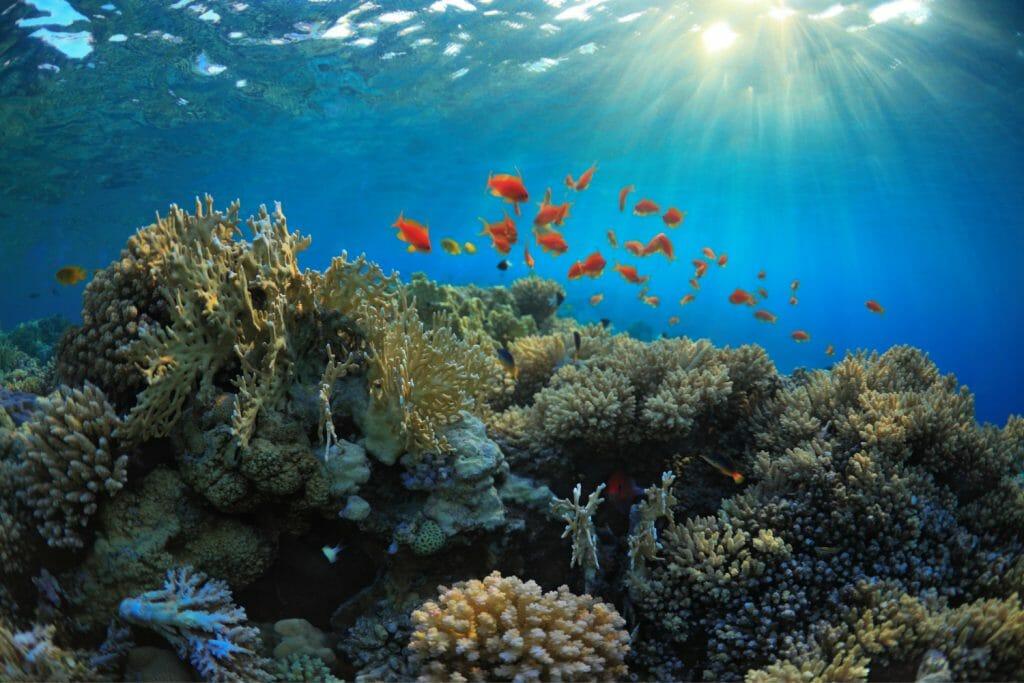 Underwater life at John Pennekamp State Park in the Florida Keys