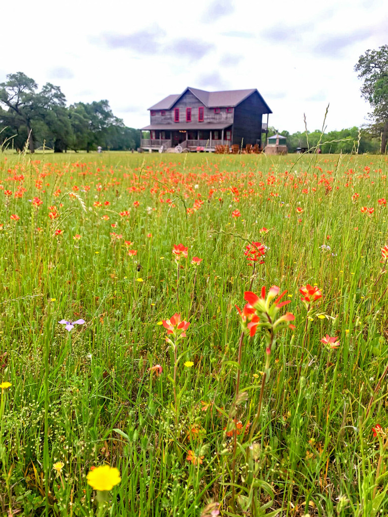 View of the wander inn from the fields of flowers