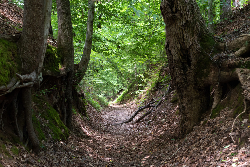 The sunken trace is an area where the natchez trace had been so heavily traveled that it sunk much lower than the surrounding landscape.
