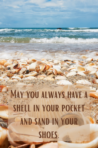 close up of shells on the beach with the beach quote: May you always have a shell in your pocket and sand in your shoes.